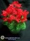 Мастер-класс по плетению из бисера - цветок